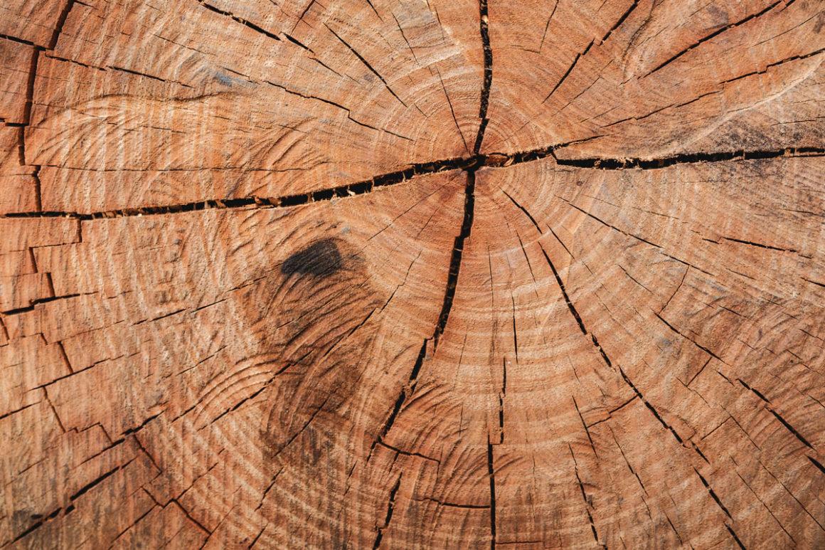 Aus Holz wird Zellulose, aus Zellulose wird Stoff