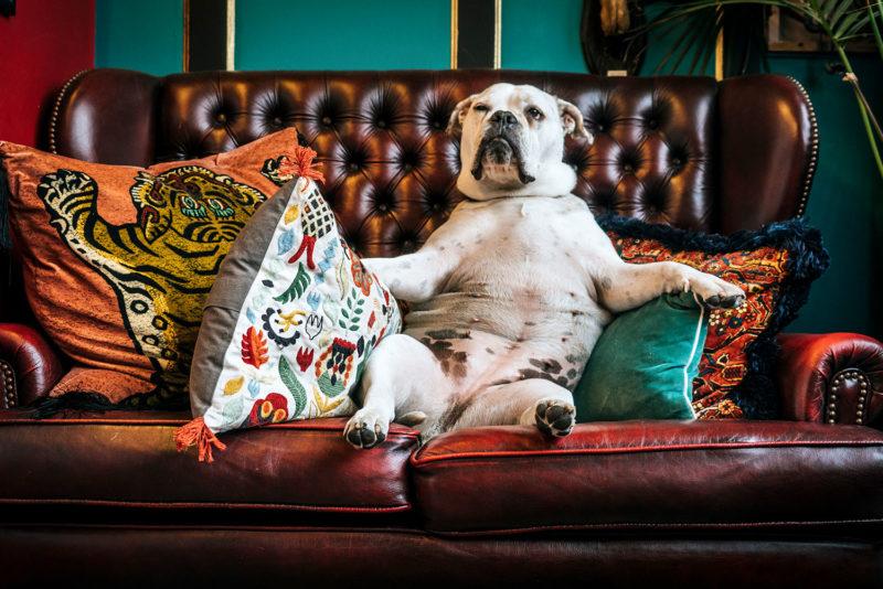 Ein Hundesofa kann der Lieblingsplatz des Vierbeiners werden
